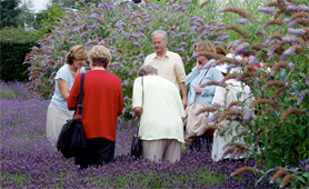 Students in a Lavender Garden